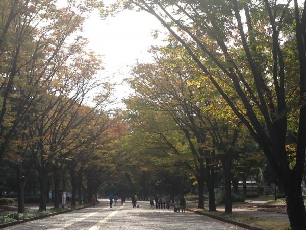 朝の駒沢公園