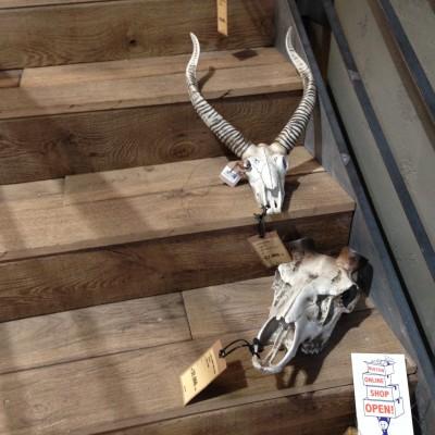 動物の骨のオブジェ