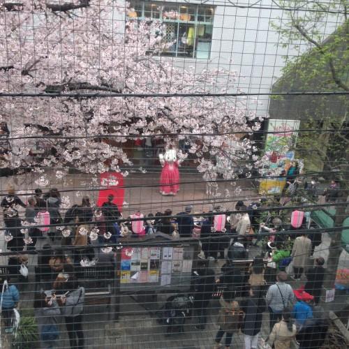 自由が丘桜まつり